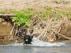 Jeffrey im Wasser
