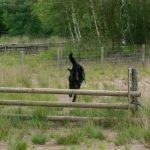 Training über Zäune Beerse 29.7.17 @ Simone