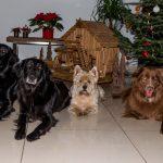 Weihnachten 2016 Sven