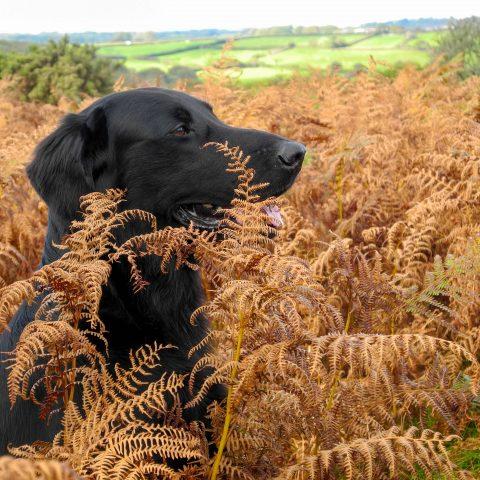 Training Dartmoor 8.10.17