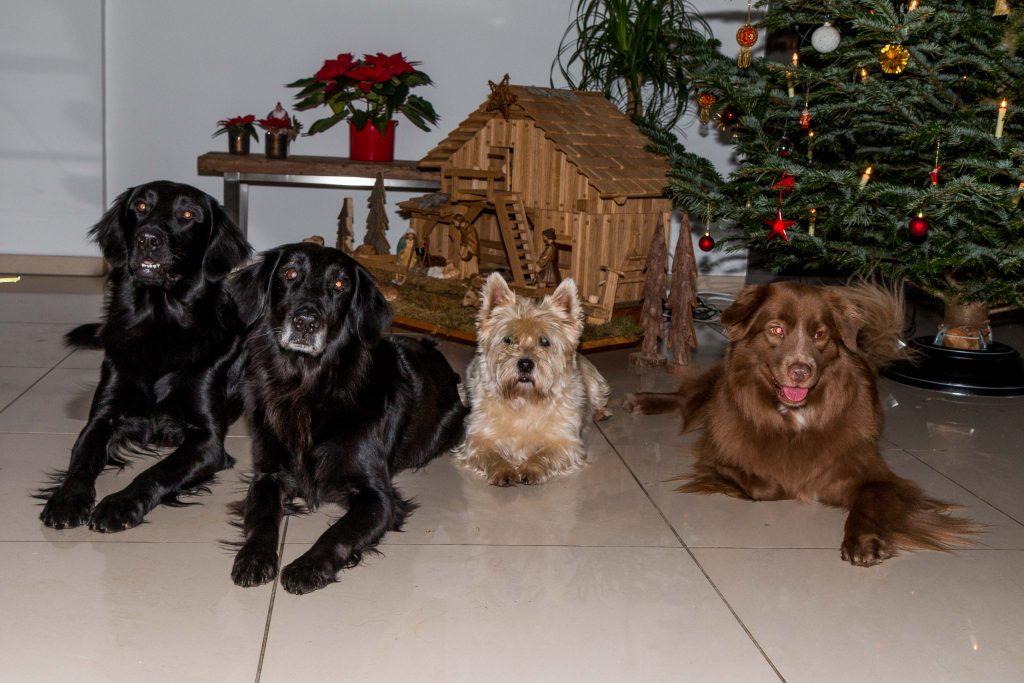Weihnachten 2017 Gruß Hunde 2016