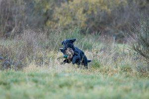 jagdliche Szenen Ican 24.11.17 @ AM Photographics