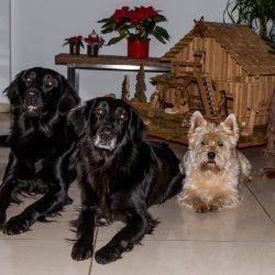 Hunde 2016 Weihnachten Gruß 2017