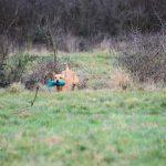 Mock Trail Training Herman Jeske 28. +29.12.17